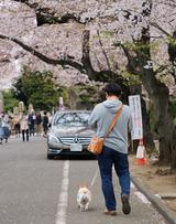 今年の都内のお花見完了(^^)
