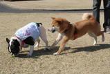 「遊ぼうよー。」(大福) 「ちょっとクンクンさせて!」(ガジ)