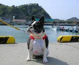 保田漁港に着いたら、、、