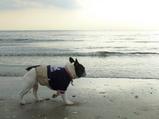 引き潮の幕張の浜。