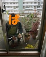 窓ガラスとベランダの