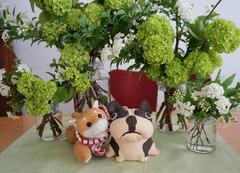 南房総の新緑♪花♪