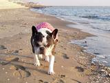 幕張の浜♪