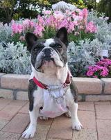 ママのお気に入り「ピンクの花壇」は