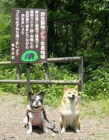 大好きな「せせらぎの道」のお散歩\(^o^)/