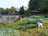 初めての公園はお花がいっぱい(^.^)
