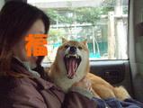「ガッちゃん五月蝿過ぎ!!」