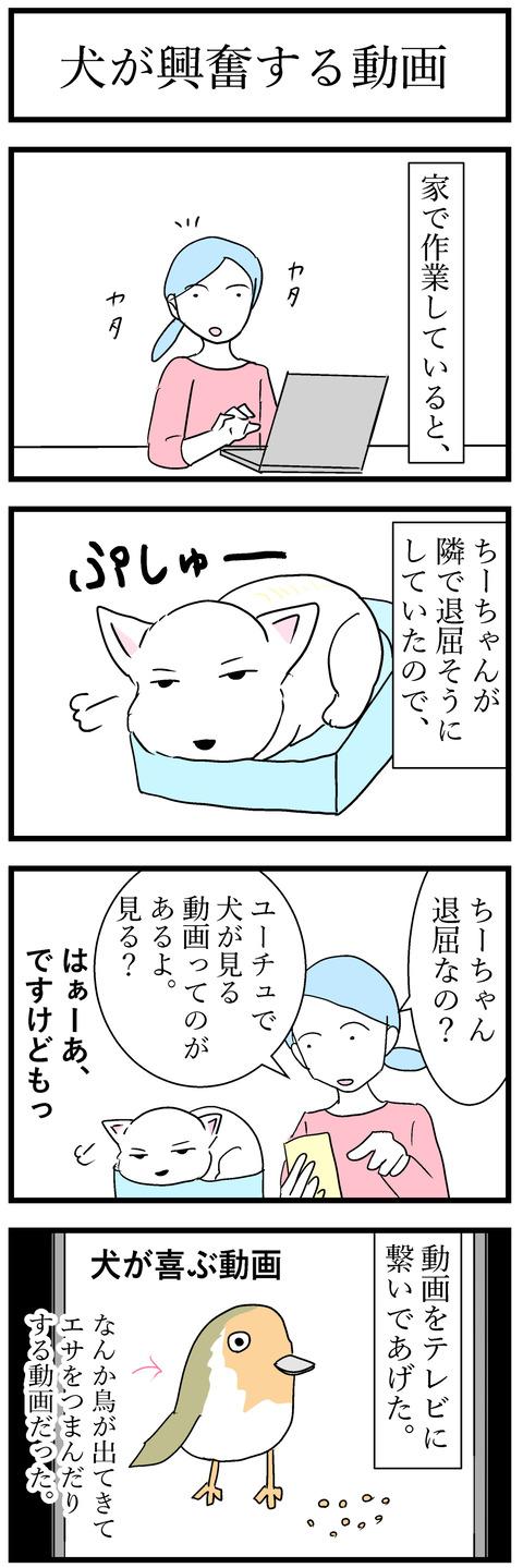 ちーちゃん131-1