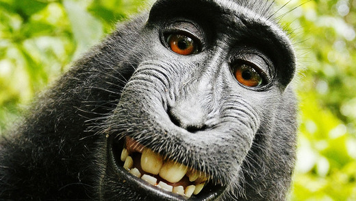 3034115-poster-p-1-the-monkey-selfie-question