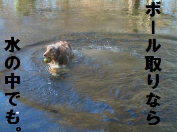 ボール取りなら水の中でも。