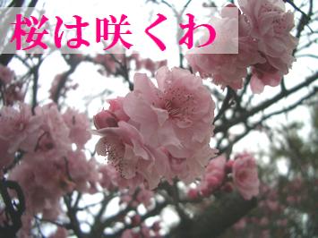 桜か梅か?
