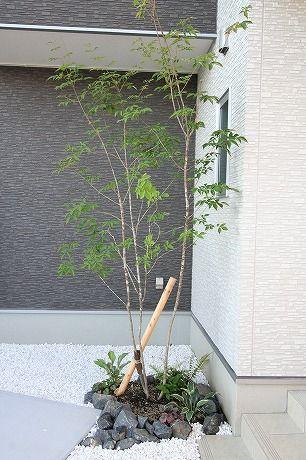 アオダモ植栽 グリ石