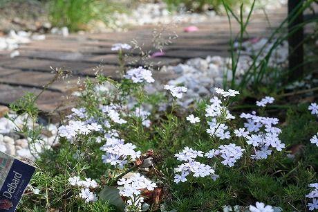 レンガの小道と草花