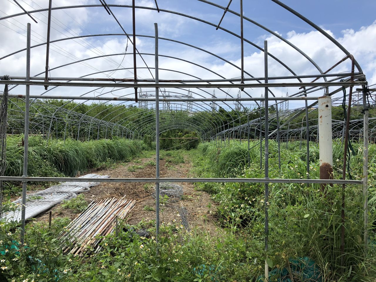 識名さんの農場