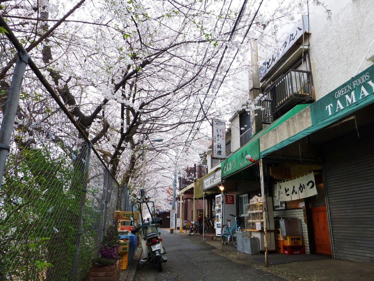 お店の前の桜並木が満開でした!