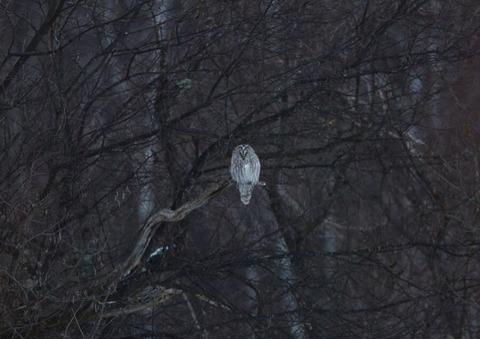 林野庁認可「八ヶ岳 森の番人」の正会員を募集します。