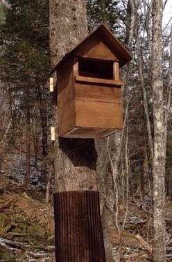フクロウの保護活動