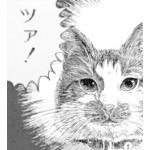 陸戦暮らしのツァ猫キャット