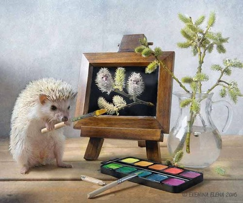 secret_world_of_hedgehogs_03