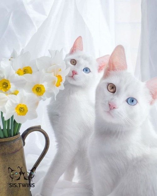 かわい過ぎる猫ちゃんの画像(7枚目)