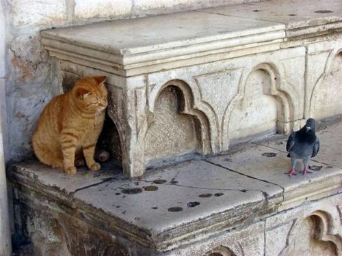 獲物を狙うかわいいネコの画像(15枚目)