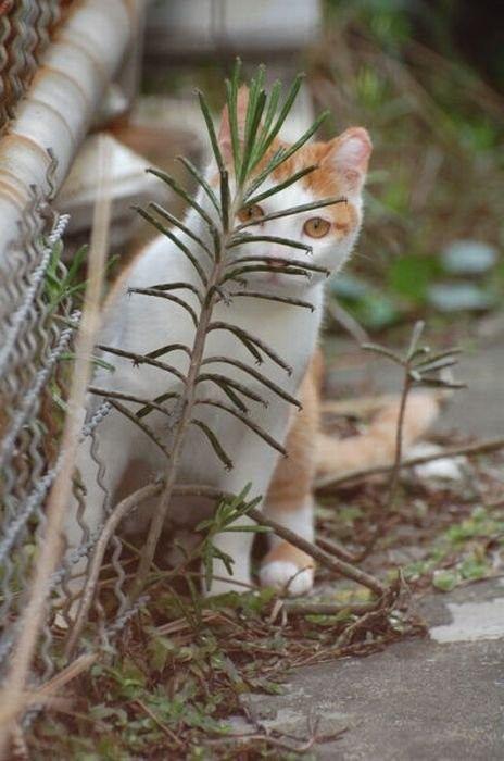 獲物を狙うかわいいネコの画像(6枚目)