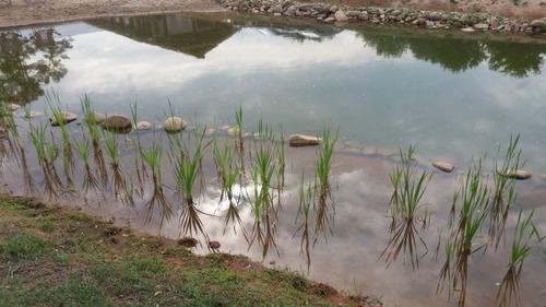 巨大な池の画像(21枚目)