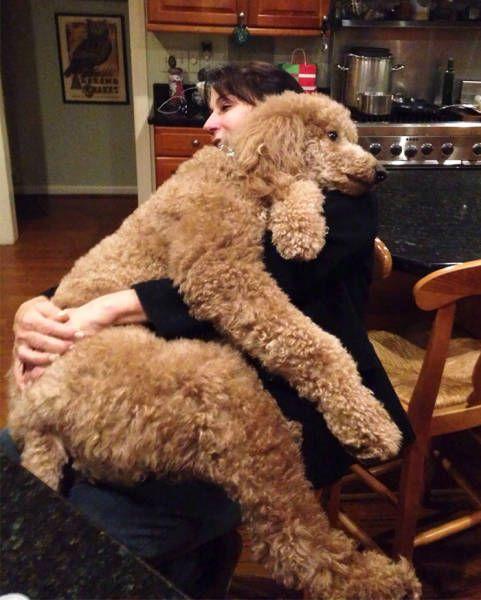 巨大な犬の画像(36枚目)