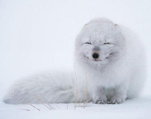 幸せそうな表情の動物達の画像(12枚目)