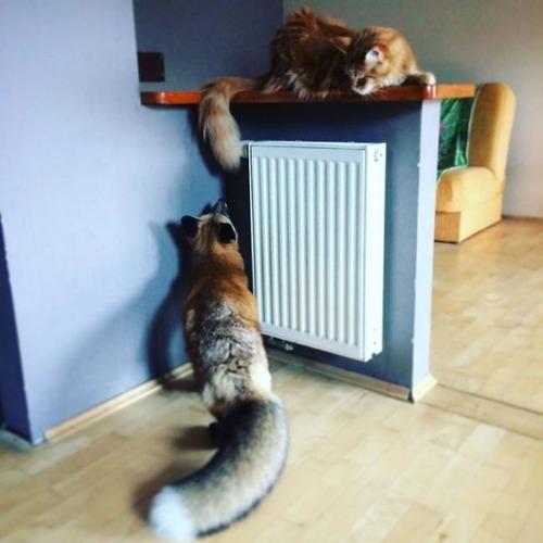 犬と猫と仲良しのキツネの画像(8枚目)