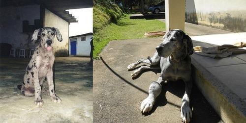 犬や猫の最初に撮った写真と最後に撮った写真の数々の画像(4枚目)