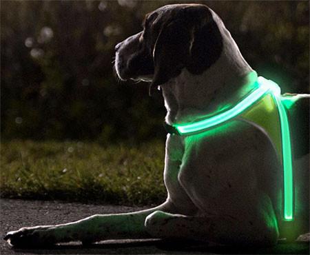 暗い夜でもよく光る!光る犬用のベストがカッコいい!!の画像(3枚目)