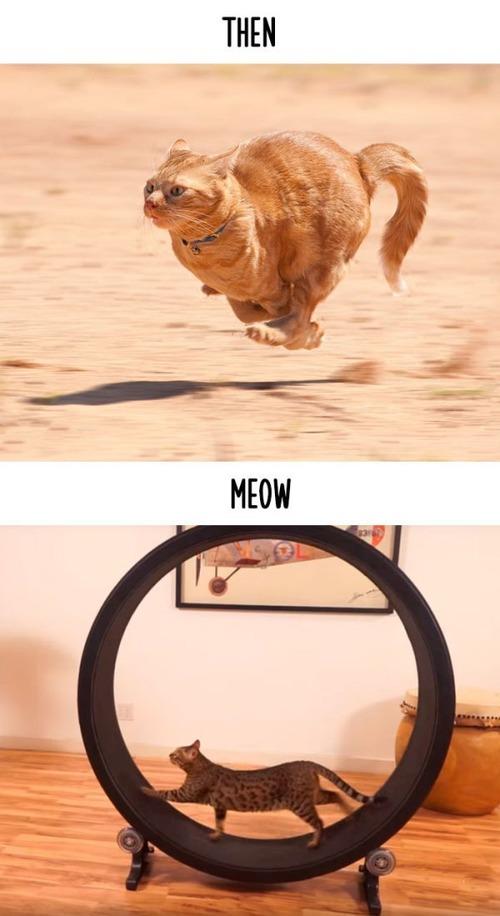 テクノロジーの進化がネコ達に与えた影響の比較画像の数々!!の画像(11枚目)