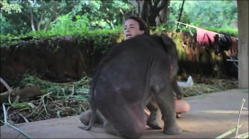 【動画】子供のゾウに懐かれると嬉しい_000003251