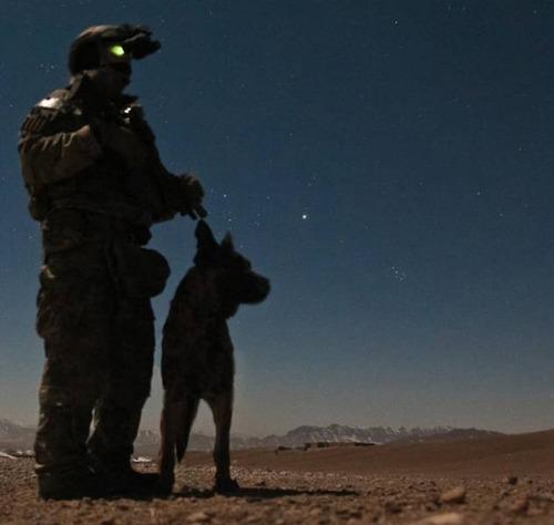 戦地での軍用犬の日常がわかるちょっと癒される画像の数々!!の画像(1枚目)