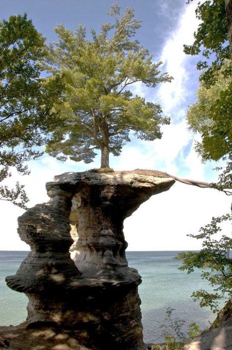 生えている樹木の画像(11枚目)