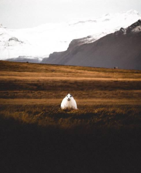 アイスランドの風景の画像(76枚目)