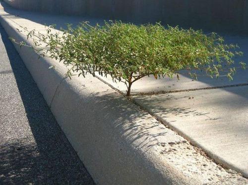 生えている樹木の画像(4枚目)