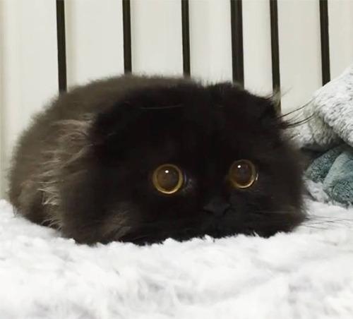 kittens_21
