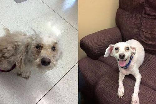捨犬の時と良い飼主が見つかった時のワンちゃんのほのぼの比較画像の数々!!の画像(11枚目)