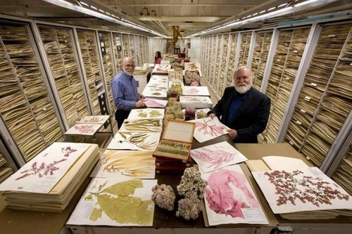 【画像】アメリカを代表するスミソニアン博物館の標本の保存倉庫が凄い!!の画像(7枚目)