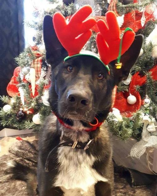 クリスマスのコスプレをした動物達の画像(21枚目)