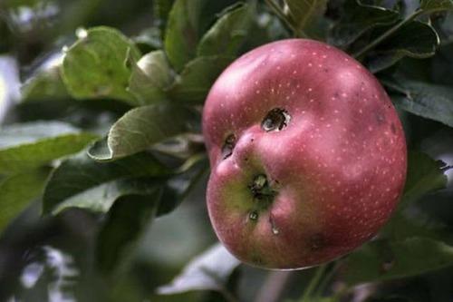 人や動物に見える野菜や果物の画像(30枚目)