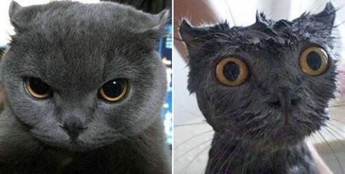 猫ちゃんの濡れる前後の比較の画像(10枚目)