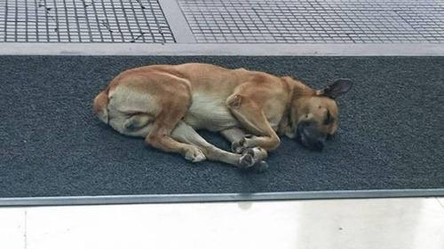 スチュワーデスさんに拾われた犬の画像(2枚目)