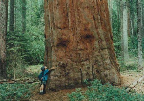 不気味な形の樹木の画像(11枚目)