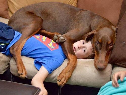 犬は可愛いけど、かなりジャマな感じの犬の画像の数々!!の画像(4枚目)
