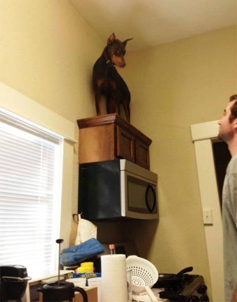 怯えてる犬の画像(11枚目)