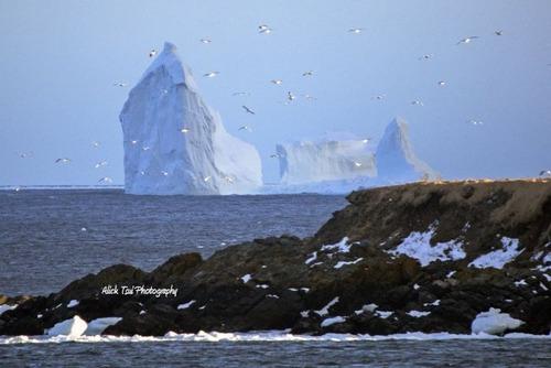 巨大な流氷の画像(9枚目)