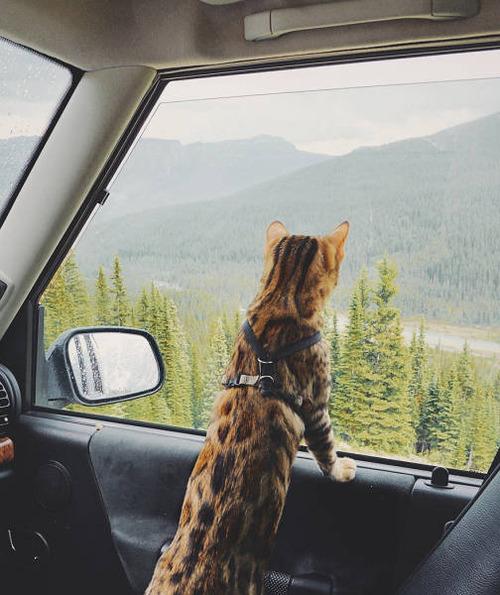 美しい風景と猫の画像(18枚目)